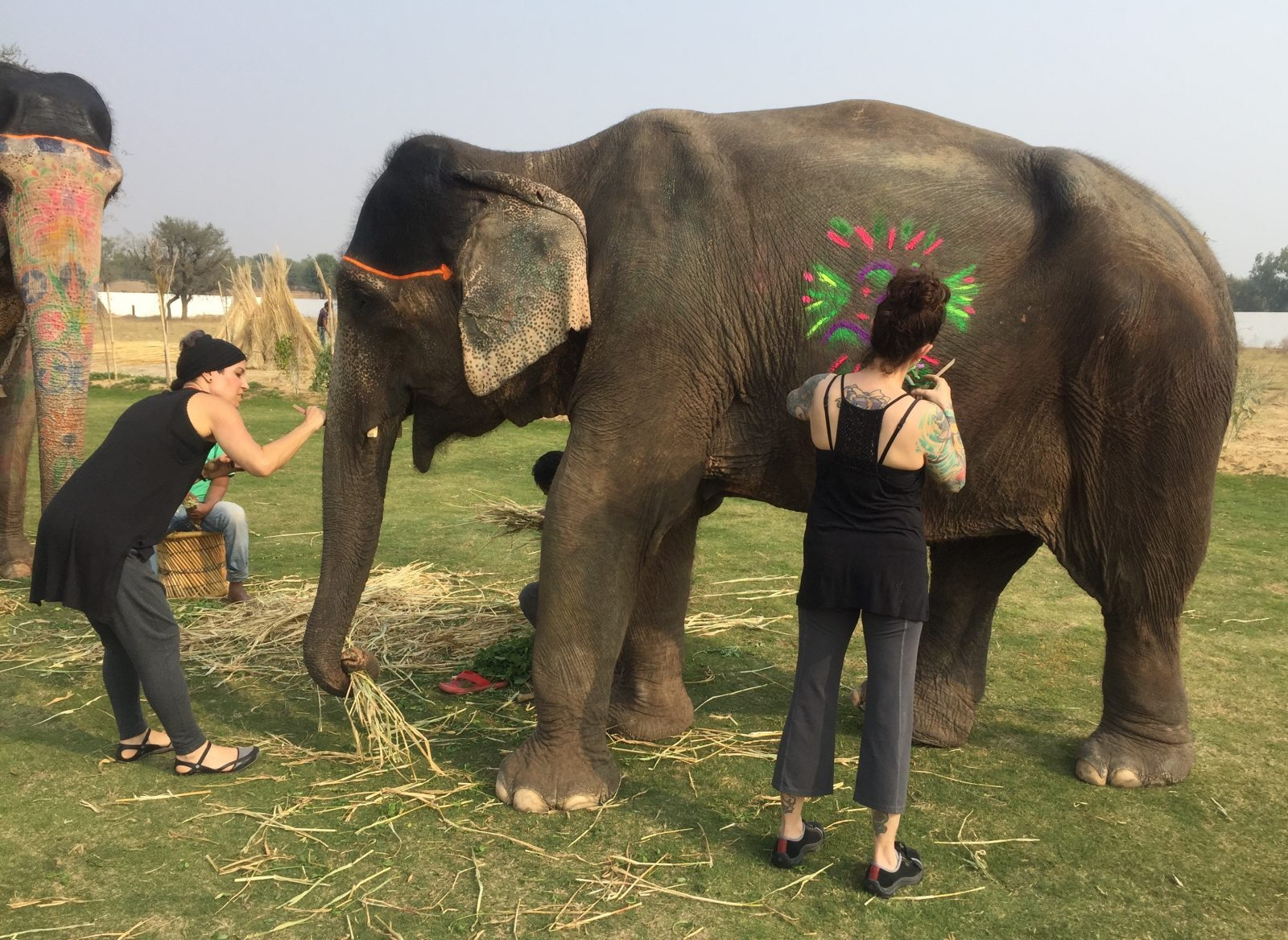 Elephant Painting in Jaipur