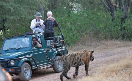 Explore Ranthambore by Maharajas Express